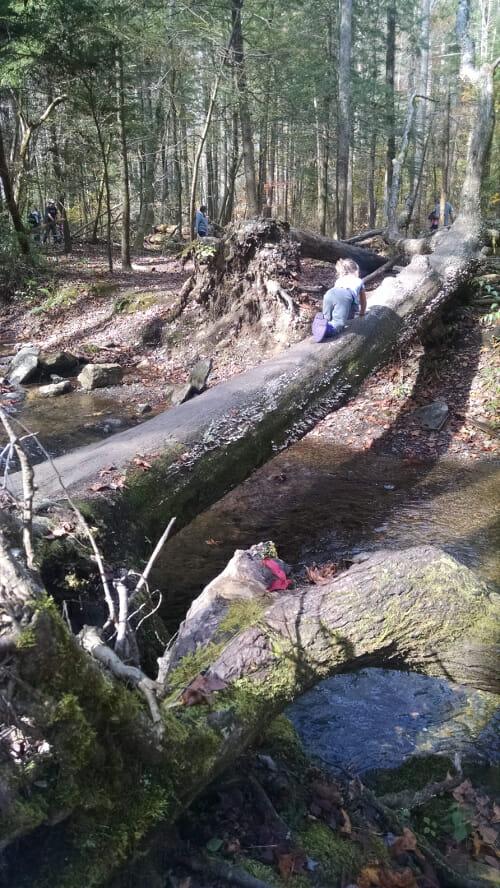 TreeBridge