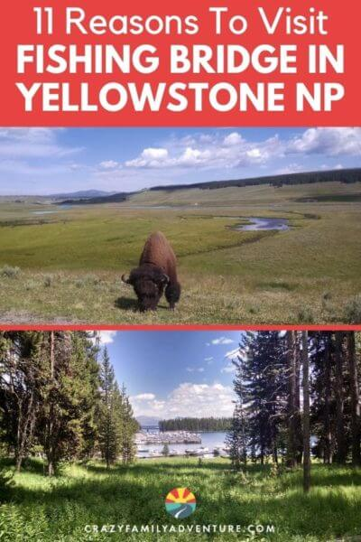 11 Reasons to visit Fishing Bridge Yellowstone! This is one of our favorite places in Yellowstone National Park. Make sure to have it on your Yellowstone Vacation itinerary. Check out the Yellowstone Lake and Yellowstone River and be sure to look for the cutthroat trout and grizzly bears!