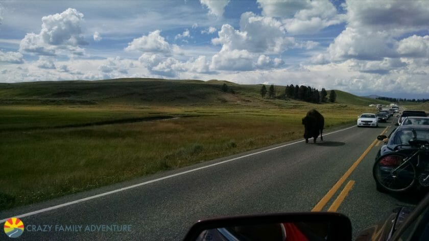 buffalo-jam makes you add patience to your Yellowstone packing list!