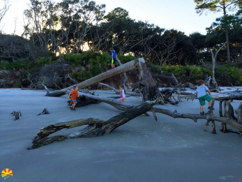 driftwood-beach-2