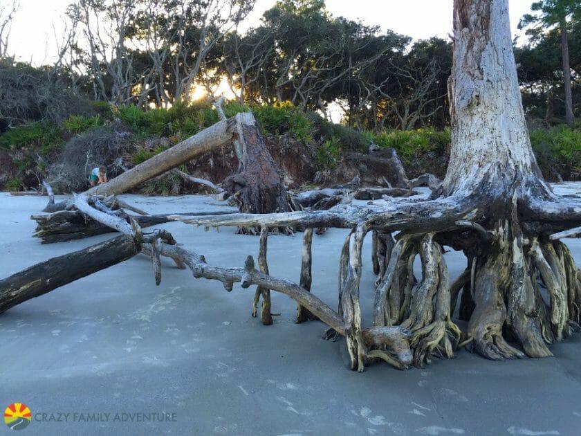 driftwood-beach-3