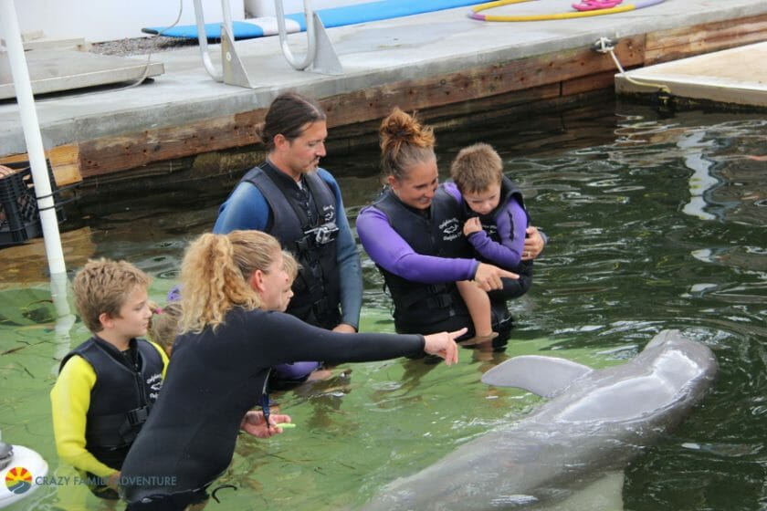 Dolphins Plus LearningaboutDolphins