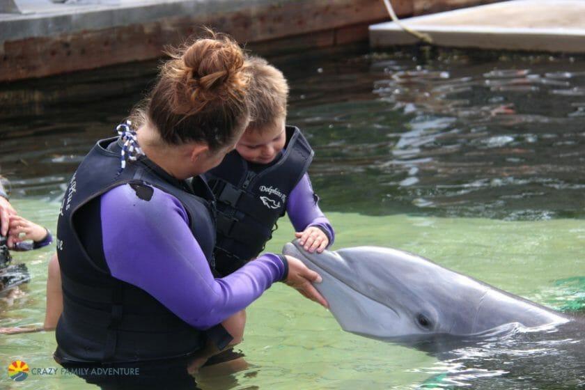 Dolphins Plus PettingDolphins