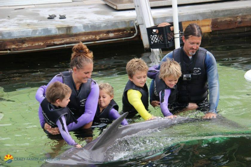 Dolphins Plus PettingDolphinsFloridaKeys