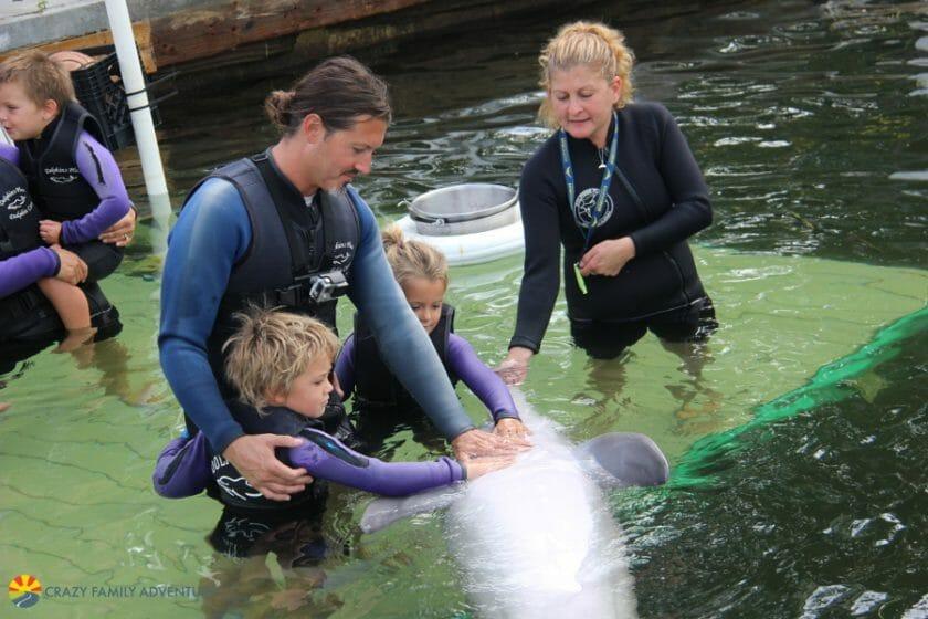 Dolphins Plus PettingaDolphintummy