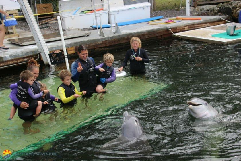 Dolphins Plus PlayingwithDolphinsFloridaKeys