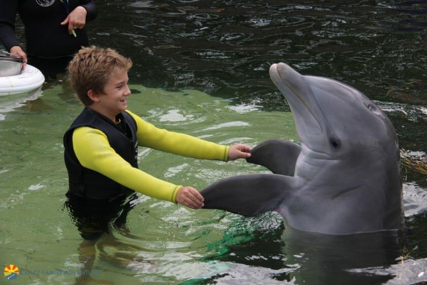 Dolphins Plus Shakingdolphinhand2