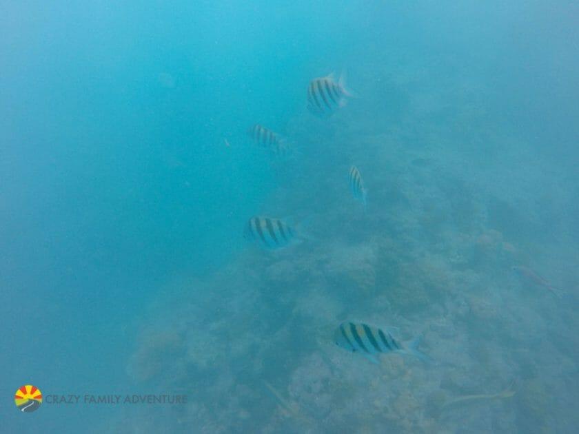 Key West With Kids - Sebago reef