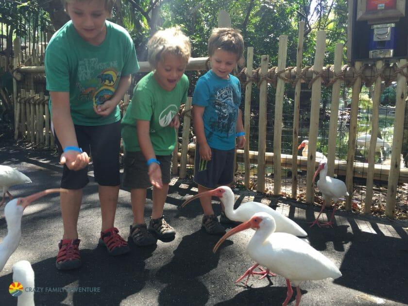 FeedingStations at Palm Beach Zoo
