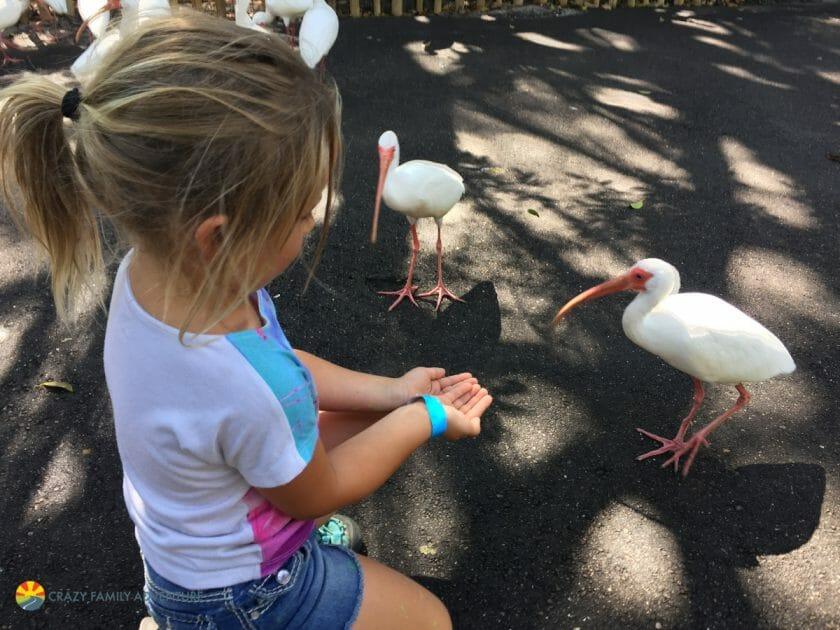 Palm Beach Zoo Feeding Station1