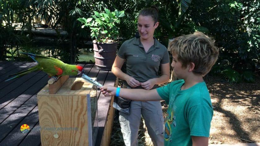 Palm Beach Zoo Parrots