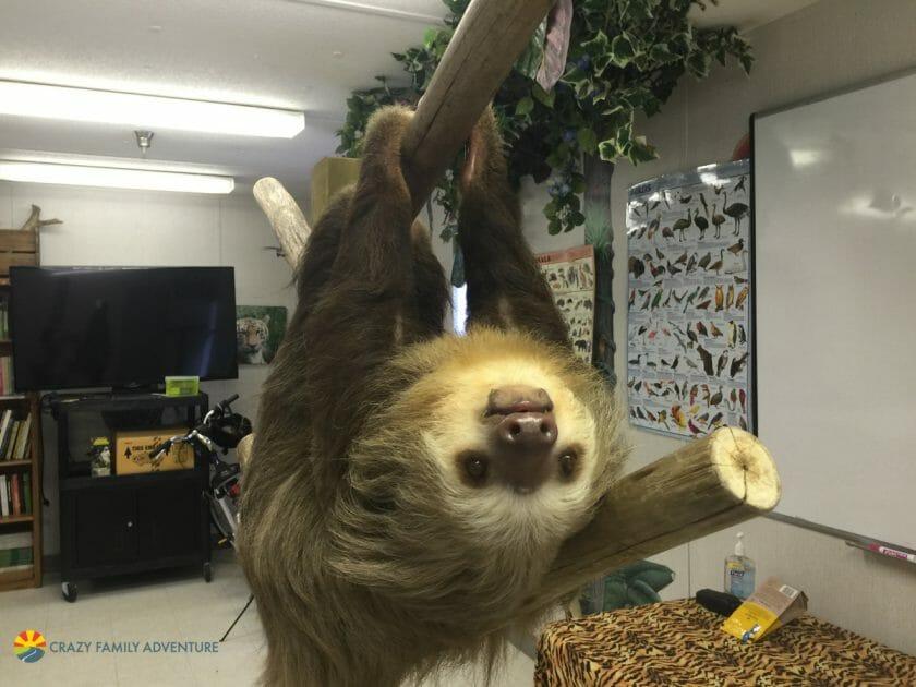 Palm Beach Zoo Sloth Encounter