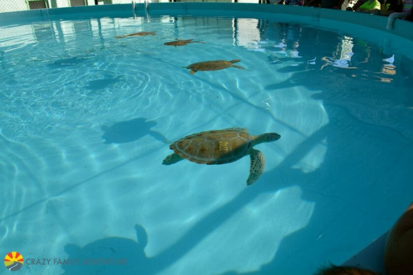 Best Place to see Turtles in the Florida Keys