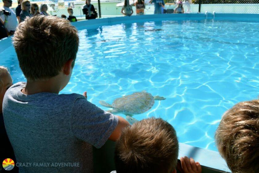 turtle-pool
