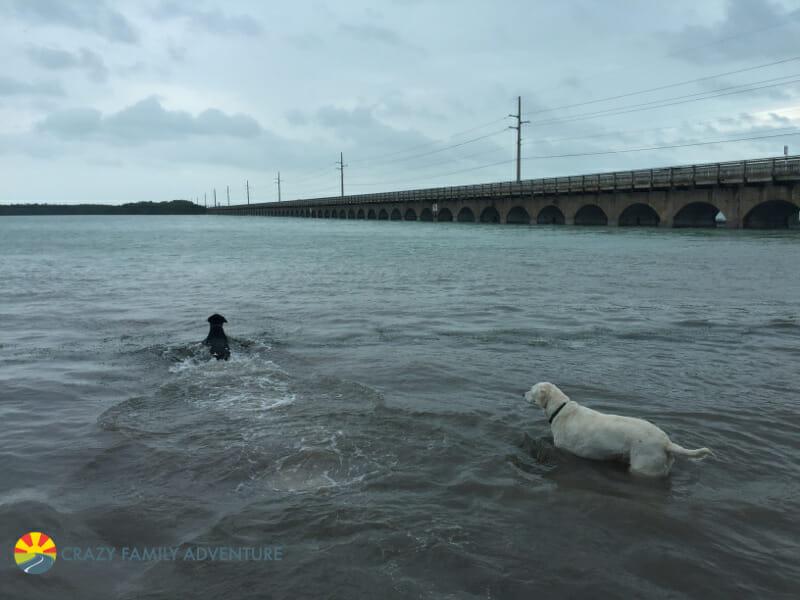 Traveling dog friendly