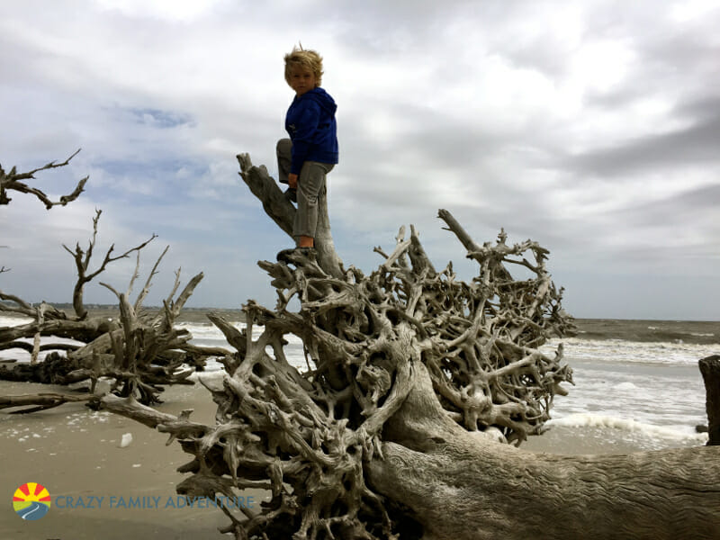 Climbing at Driftwood Beach on Jekyll Island