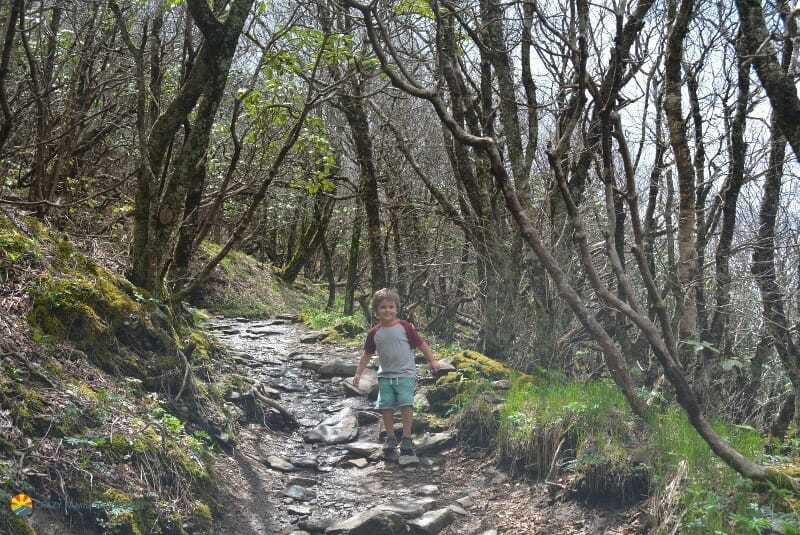 hiking with kinds in asheville craggy gardens