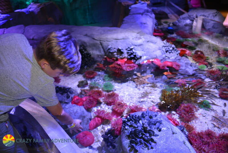 Things To Do At Mall of America With Kids - Sea Life Aquarium