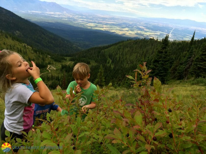 Huckleberry picking at the summit of Whitefish Mountain