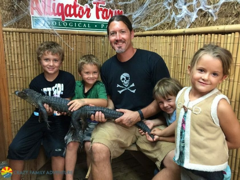 Hold a baby gator in St. Augustine