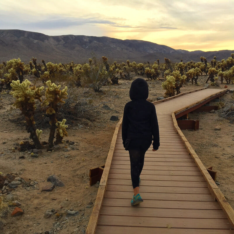 Checking out the Cholla cactuses in Joshua Tree National Park