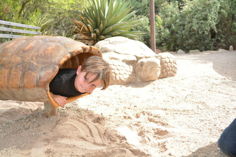 Arizona-Sonora Desert Museum should be on your list of things to do in Tucson with kids this year