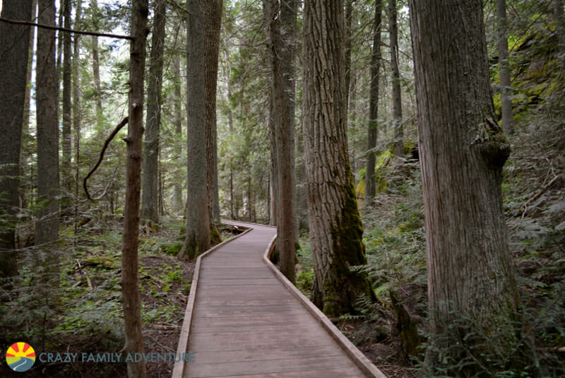 The Trail of the Cedars is a great hike to do in Glacier National Park with kids.