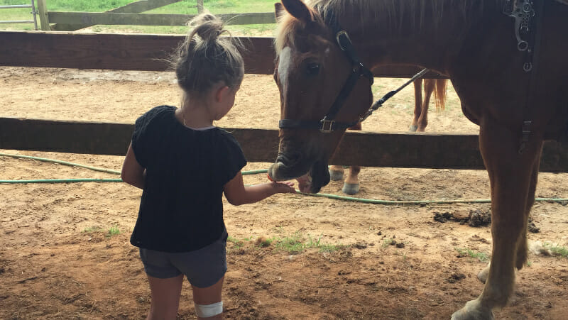 Oak Hallow horses