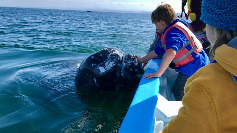 Whale Petting in Baja