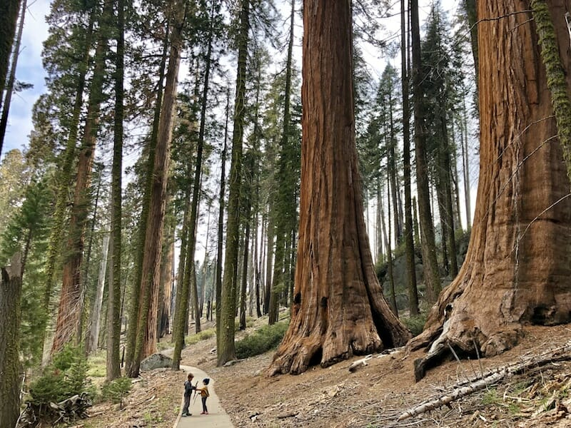 Crescent Meadow Trail THINGS TO DO IN SEQUOIA NATIONAL PARK
