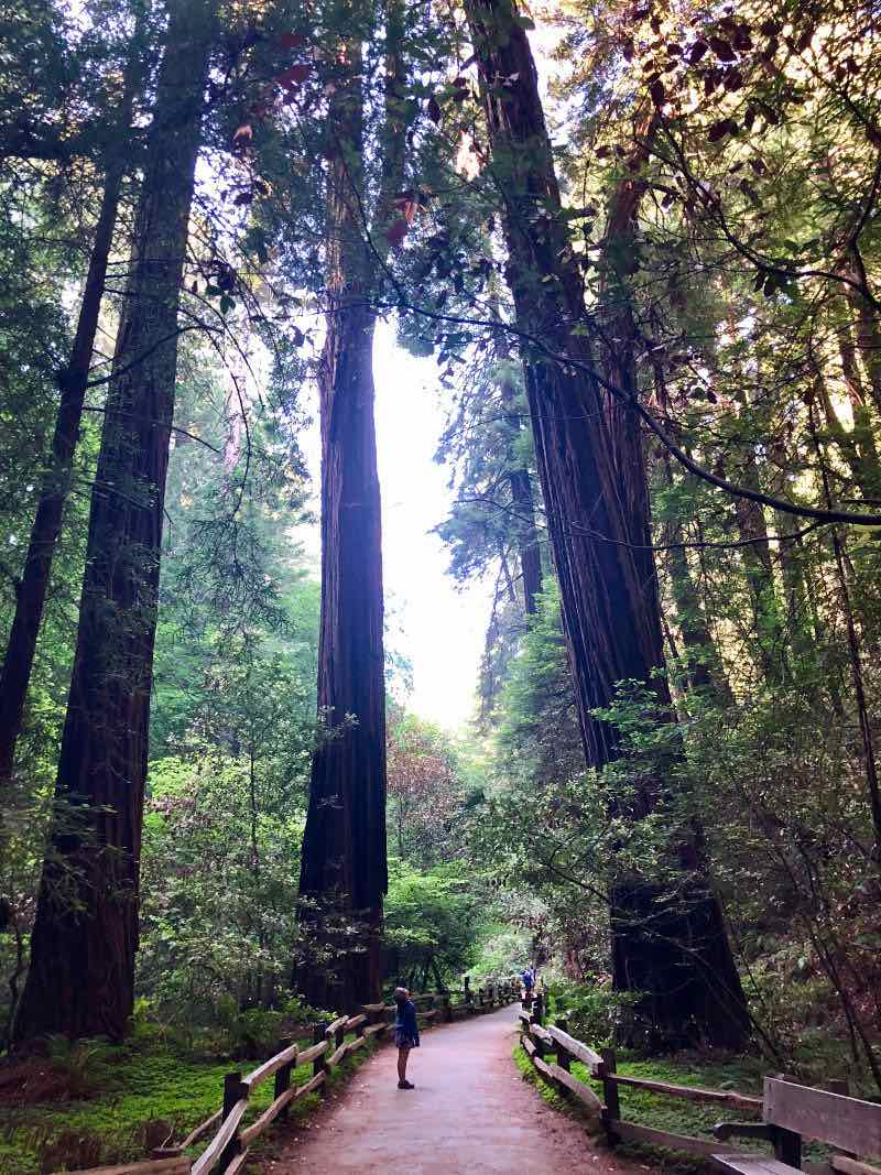 Muir Woods - our favorite thing to do in San Francisco