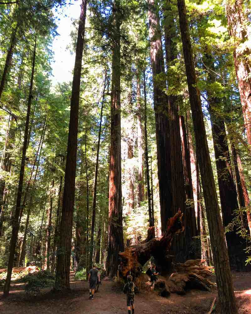 Humboldt State Park - things to do in California