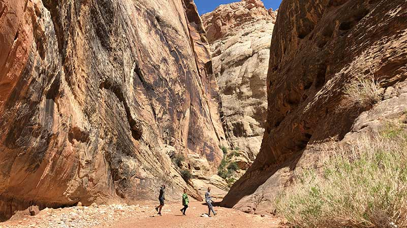 Best Hikes in Capitol Reef National Park - Grand Wash Trail