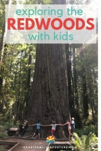 Redwood National Park is huge and encompasses several smaller parks. We will help you navigate to the best places to see and enjoy the majestic Redwoods!