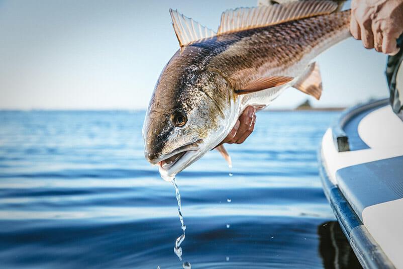 Destin Fishing Charters Catching A Fish
