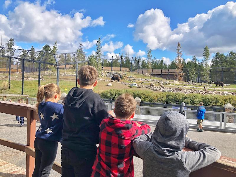 Grizzly and Wold Discovery Center in West Yellowstone