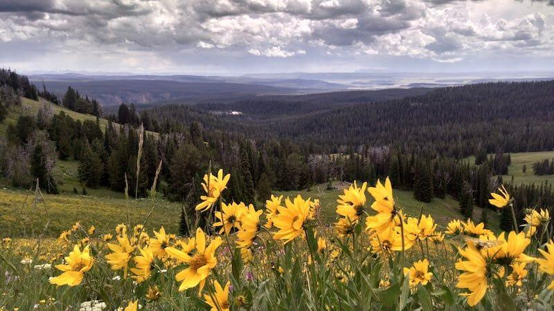 Mount Washburn Hike in Yellowstone