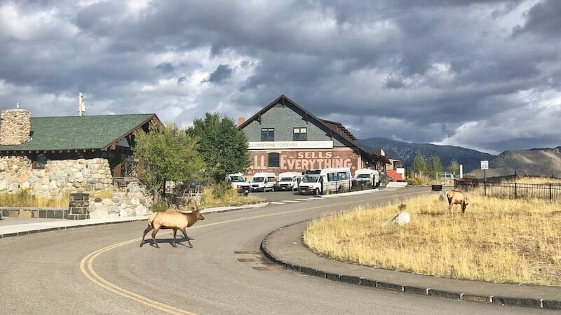 Elk Spotting
