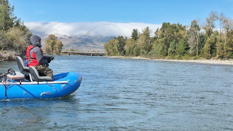 Fish on the Yellowstone River in Livingston