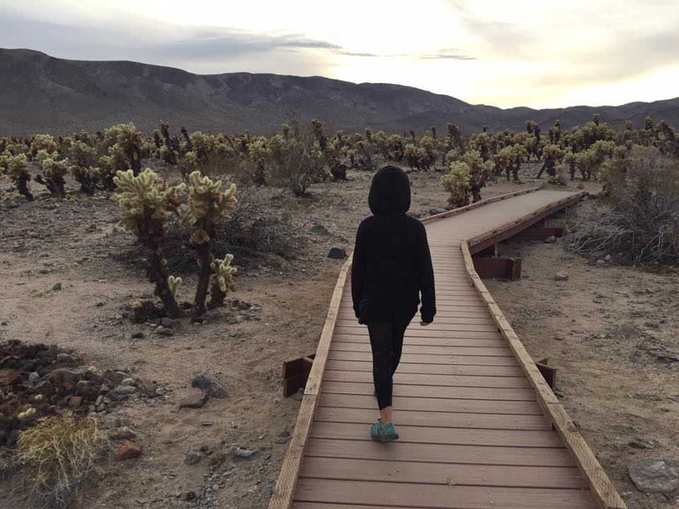 things to do in southern California -Joshua Tree National Park