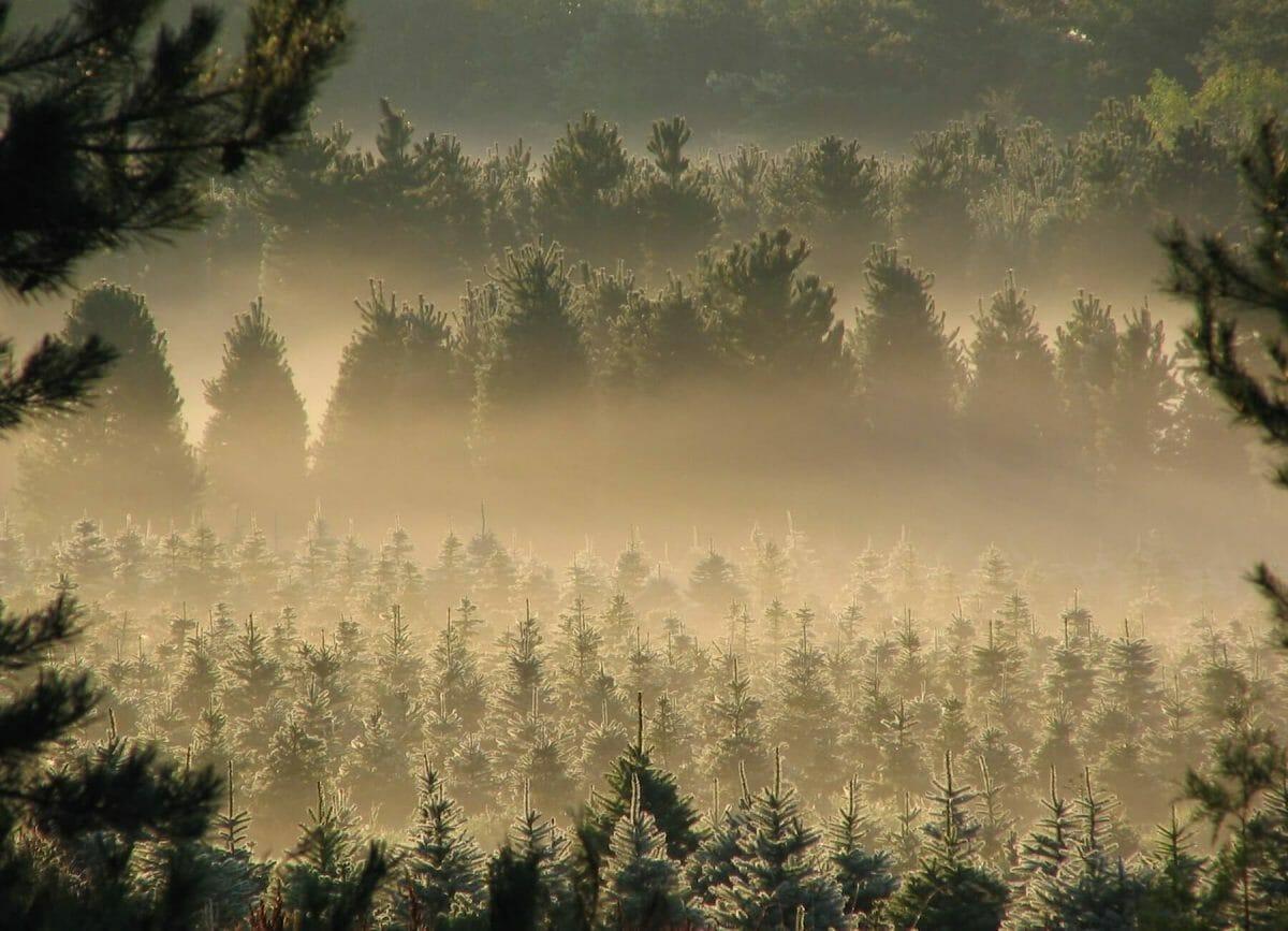 Christmas tree farm Wisconsin