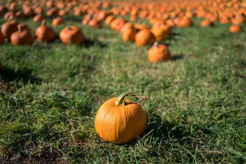 Wisconsin pumpkin patch