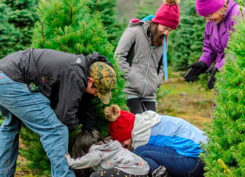 Cutting a Christmas tree