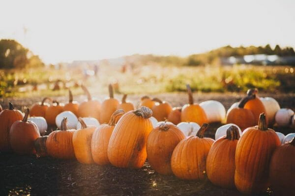 15 Best Pumpkin Patches In Wisconsin To Visit In 2021