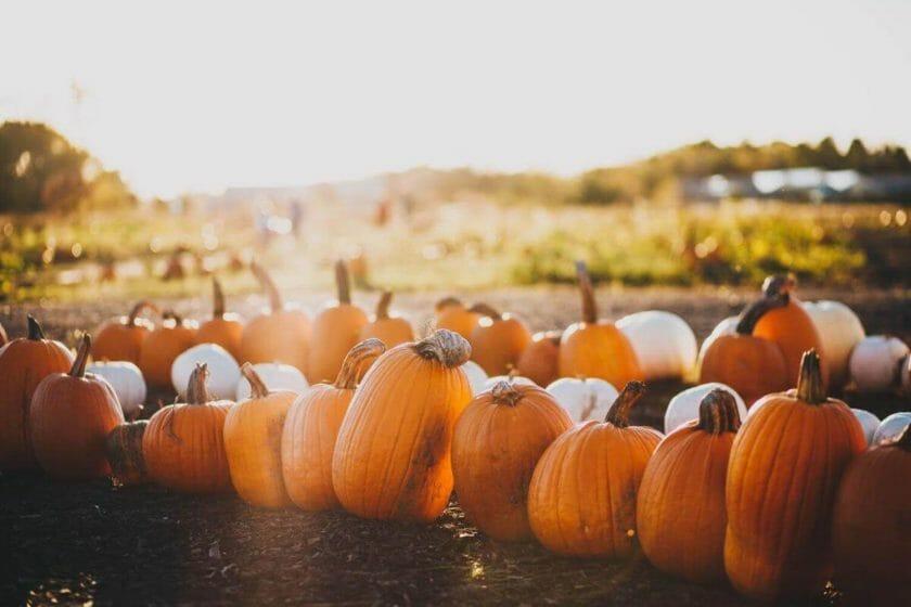 Pumpkin Patches in Wisconsin